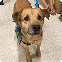 Adopt A Pet :: Houdie - Phoenix, AZ