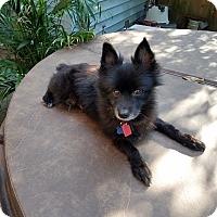 Adopt A Pet :: Tarmac - conroe, TX