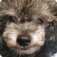 Adopt A Pet :: Pepin - San diego, CA