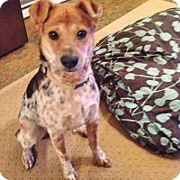 Adopt A Pet :: Doug - Bergheim, TX