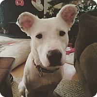 Adopt A Pet :: Gracie - Raeford, NC