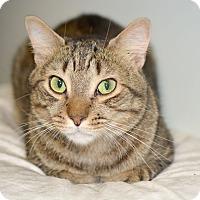 Adopt A Pet :: Freddy - Queens, NY