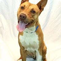 Adopt A Pet :: Grant - New Orleans, LA