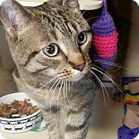 Adopt A Pet :: Tigger - Franklin, NH