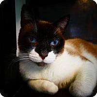 Adopt A Pet :: Casanova - Sarasota, FL