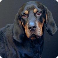 Adopt A Pet :: Lucas - Newland, NC