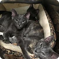 Adopt A Pet :: Tabatha, Banks and Locus - Patterson, NY