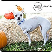 Adopt A Pet :: China Doll - Shawnee Mission, KS