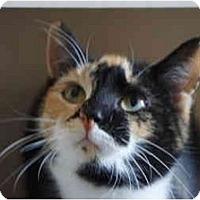 Adopt A Pet :: Maya - Xenia, OH