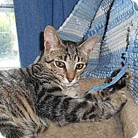 Adopt A Pet :: Sue - Richland, MI