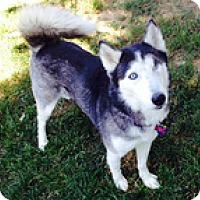 Adopt A Pet :: Niki - Spring City, TN