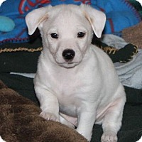 Adopt A Pet :: Button - La Habra Heights, CA