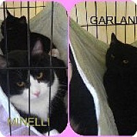 Adopt A Pet :: Garland & Minnelli - Delmont, PA