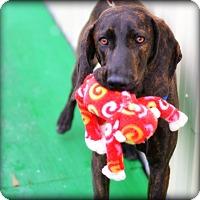 Adopt A Pet :: Banjo (DD) - Brattleboro, VT
