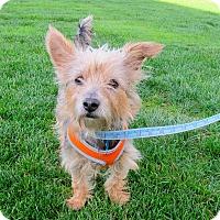 Adopt A Pet :: Mandy (Adoption Pending) - Gig Harbor, WA