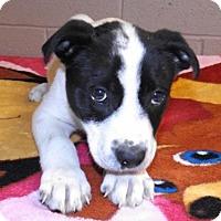 Adopt A Pet :: Nano - Oxford, MS