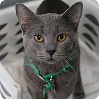 Adopt A Pet :: Creature - Bradenton, FL