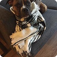 Adopt A Pet :: Tito (COURTESY POST) - Baltimore, MD