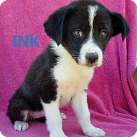 Adopt A Pet :: Ink - New Oxford, PA