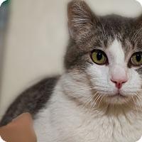 Adopt A Pet :: Saguaro - Fountain Hills, AZ
