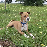 Adopt A Pet :: A - LUKE - Wilwaukee, WI
