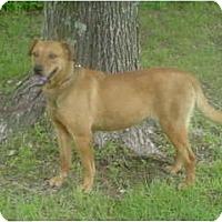 Adopt A Pet :: Abby - Russellville, AR
