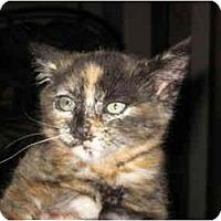 Adopt A Pet :: Gopher - Davis, CA