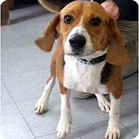 Adopt A Pet :: Earl - Washington, NC