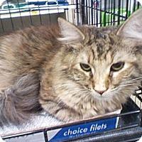 Adopt A Pet :: Tawny - Monroe, GA