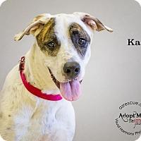 Adopt A Pet :: Kai - Phoenix, AZ