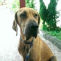 Adopt A Pet :: Goofy - San Ramon, CA