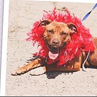 Adopt A Pet :: Louise - Joliet, IL