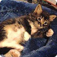 Adopt A Pet :: Brooke - East Brunswick, NJ