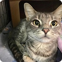 Adopt A Pet :: Jolene - East Brunswick, NJ