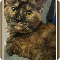 Adopt A Pet :: Dori - Fort Pierce, FL