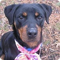 Adopt A Pet :: Cutie - Voorhees, NJ