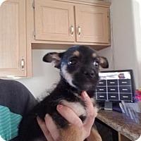 Adopt A Pet :: Mr. Miyagi - Lemoore, CA