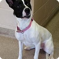 Adopt A Pet :: Princess - Troy, OH