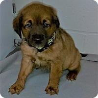 Adopt A Pet :: Almond Joy - Burgaw, NC