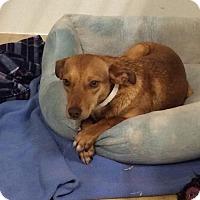 Adopt A Pet :: Alice - Suwanee, GA