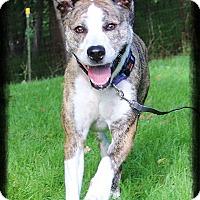 Adopt A Pet :: Luke - Shippenville, PA