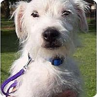 Adopt A Pet :: ARIES - Phoenix, AZ