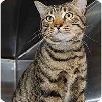 Adopt A Pet :: Cab - Modesto, CA