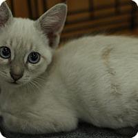 Adopt A Pet :: Friskies - Sacramento, CA