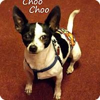 Adopt A Pet :: Choo Choo - New Orleans, LA