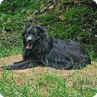Adopt A Pet :: Bud - Berthierville / Sorel, QC