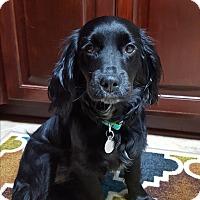 Adopt A Pet :: Willow - Marietta, GA