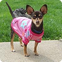 Adopt A Pet :: Rosie - Beavercreek, OH