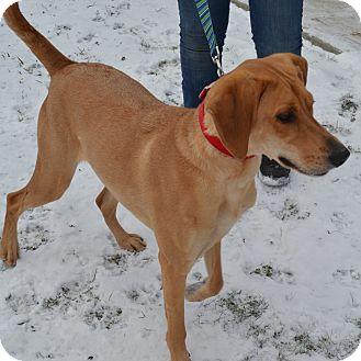 Greyhound Mix Dog for adoption in East Smithfield, Pennsylvania - Cece