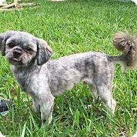 Adopt A Pet :: Wickett - Windermere, FL